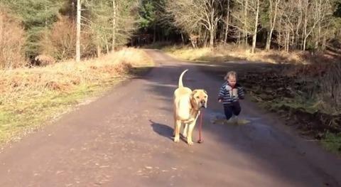 犬 子供と散歩で水溜り05