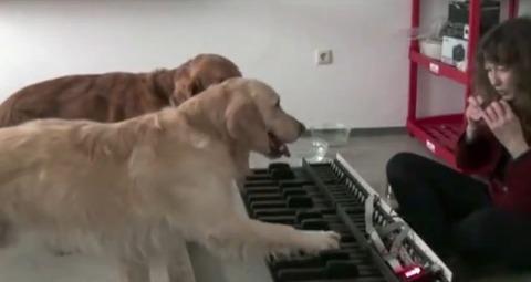 犬 piano 02