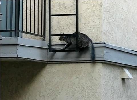 猫 壁をよじ登る07