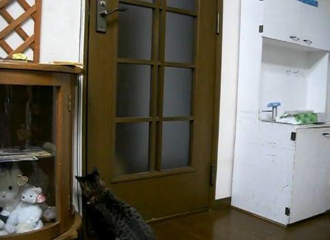 猫 扉を開けたのに閉じられる04