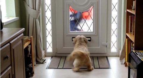 犬 郵便を散らかすシーズー03