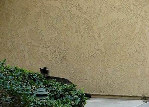 猫 壁をよじ登る01