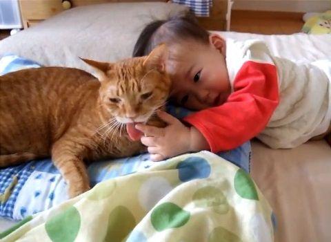 猫 赤ちゃんをペロペロ01
