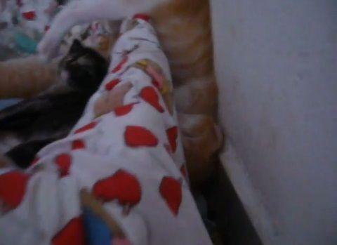 子猫 寝相が悪すぎ01