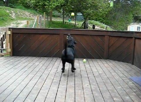 犬 ボールのサプライズプレゼント03