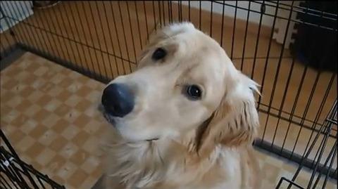 犬 首かしげ02