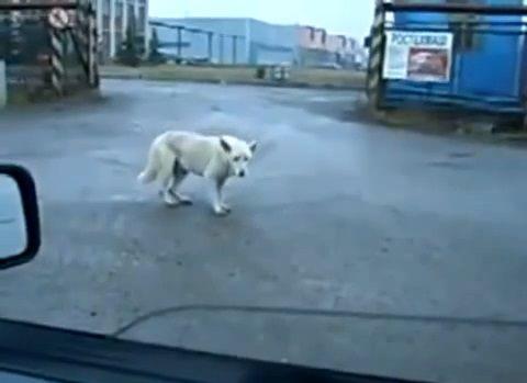 犬 ビートにノリノリ02