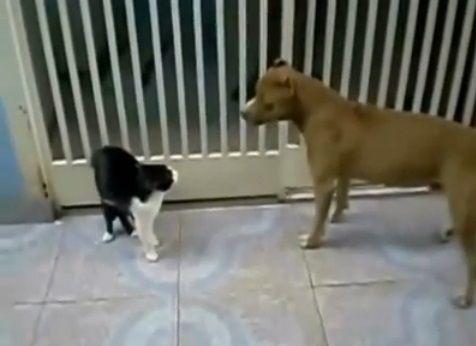 犬猫 sith 03