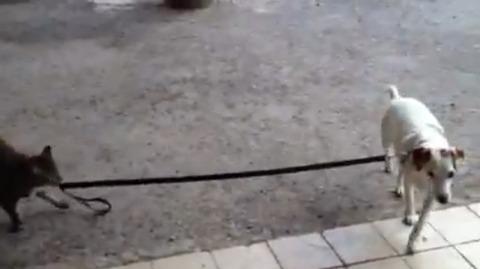 猫が犬をリードで02