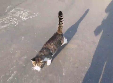 猫 懐いてついてきちゃう野良?01