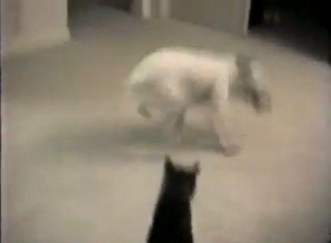 犬猫 グルグルと回って誘う犬03