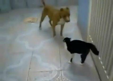 犬猫 sith 00