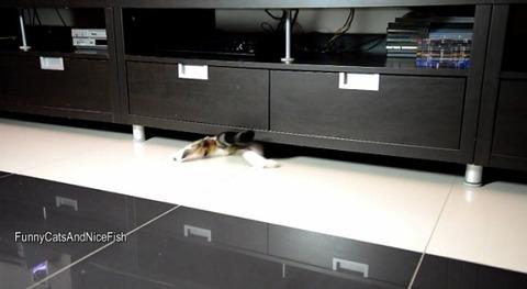 猫 家具の下まで06