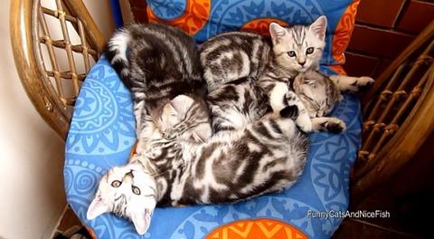 猫 椅子の上でのんびり4匹02