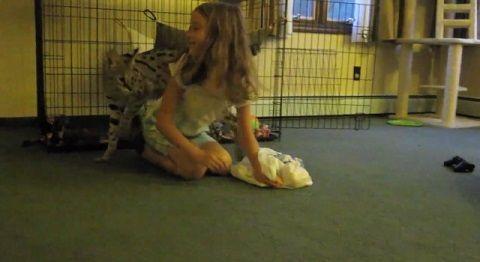 猫 サーバルと遊ぶ子03