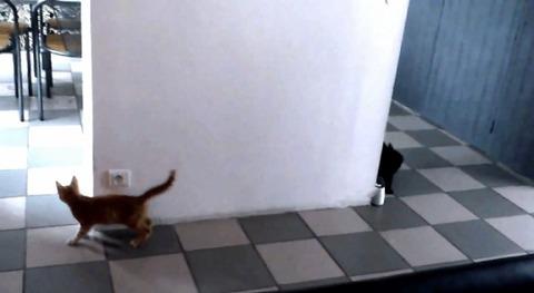 猫が猫を待ち伏せ だけど03