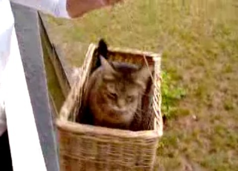 猫 ねこベーターその二 04