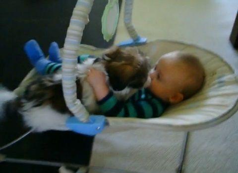 子犬 赤ちゃんベッドに登ってペロペロ03