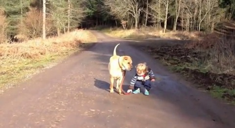 犬 子供と散歩で水溜り07