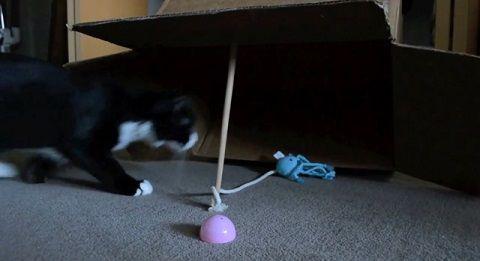 猫 古典的な罠に自ら01