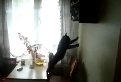 猫 ジャンプ全然届かず03