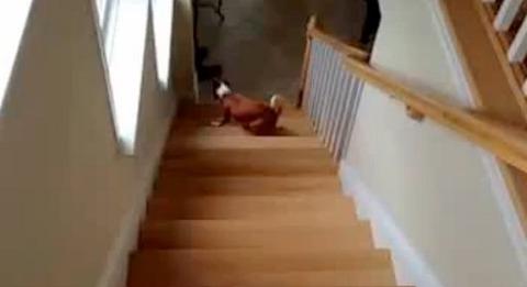 犬 階段は後ろから00