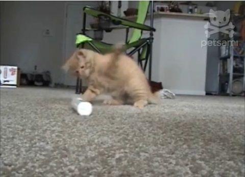 子猫 電動歯ブラシをぺしぺし03