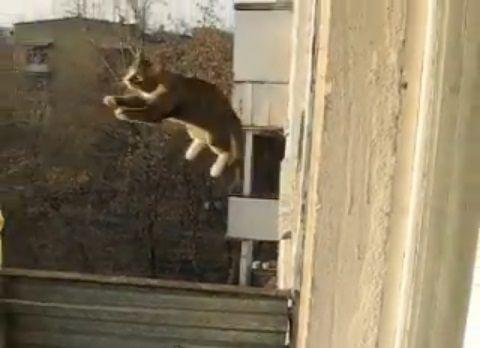 猫 三角飛び02