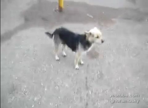 犬猫 子犬に襲われる猫04