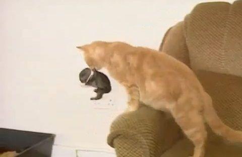 猫 ウサギを世話する03