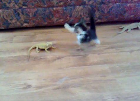 子猫 トカゲ15