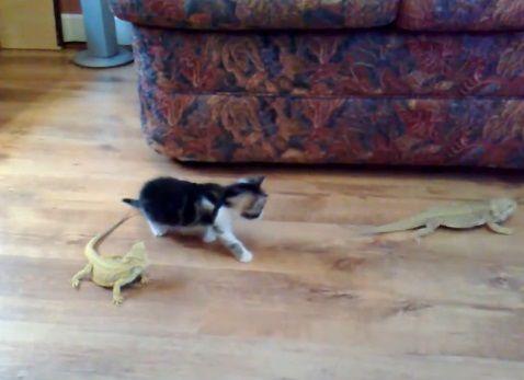 子猫 トカゲ03