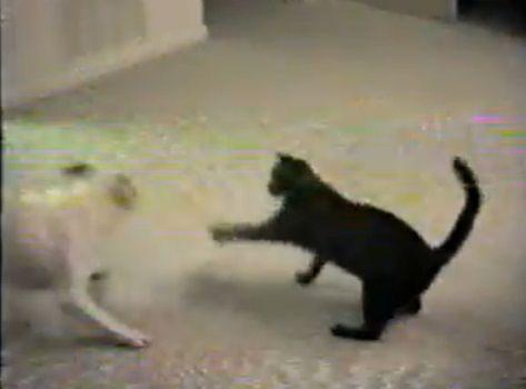 犬猫 グルグルと回って誘う犬01