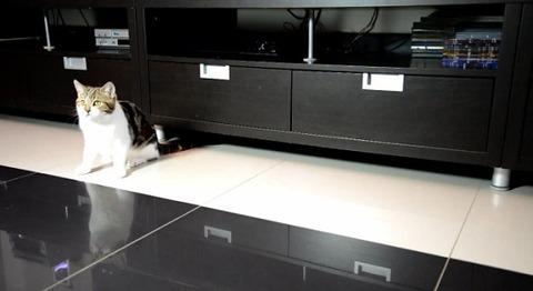 猫 家具の下まで00