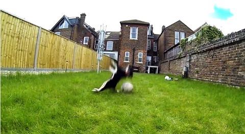 子犬 ボールにアタック・・・04