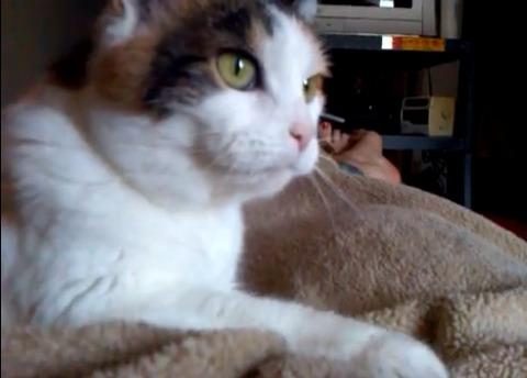 猫 毛布をモミモミ05