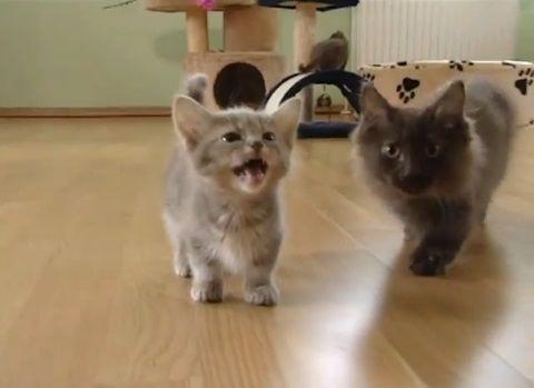 子猫 ニャーニャー言ってついてくる02