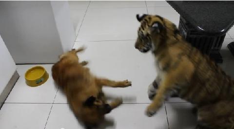 犬 遊びたい相手が無理07
