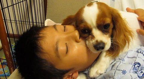 犬 子供とおしゃべりキャバリア04