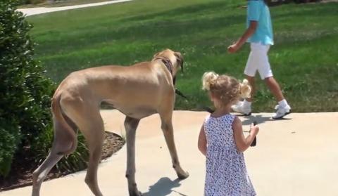 犬 女の子と散歩04