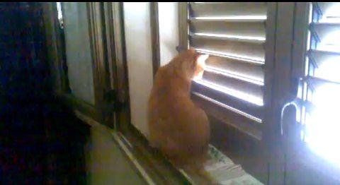 猫 ブラインド開け閉め対決00