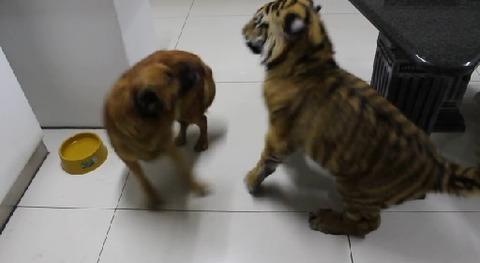 犬 遊びたい相手が無理06