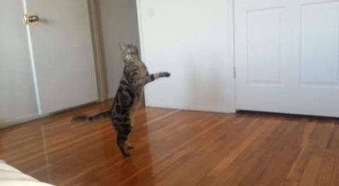 猫 直立歩き02