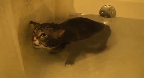 猫 お風呂で悲しげに02