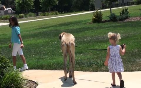 犬 女の子と散歩05