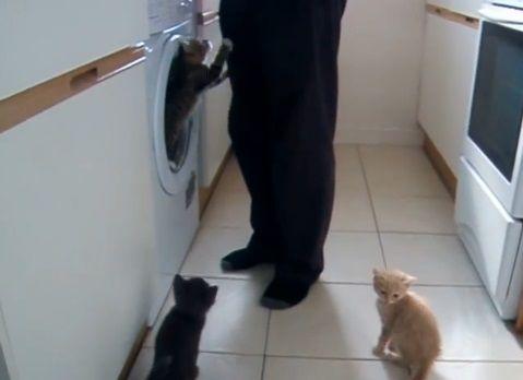 子猫 餌に群がる02