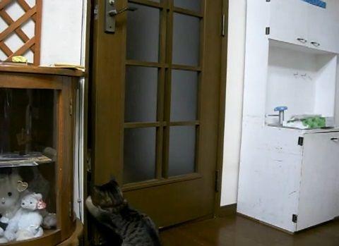 猫 扉を開けたのに閉じられる03