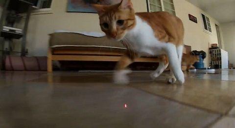猫 ポインタ視点で追い掛け回される05