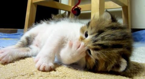 子猫 寝転がって一人で遊ぶ03