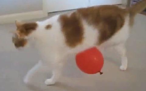 猫 風船01